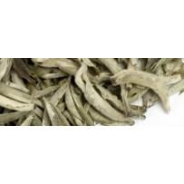 """China Guangxi White Bud """"Silver Needle"""""""